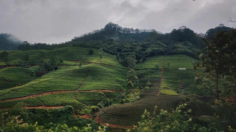 Sri Lanka Tour Packages From Trichy