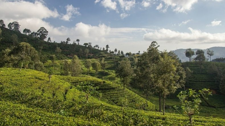 Sri Lanka or Vietnam